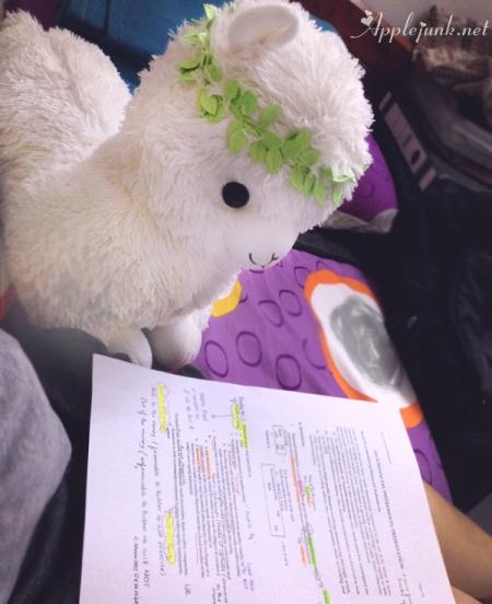 alpaca-study